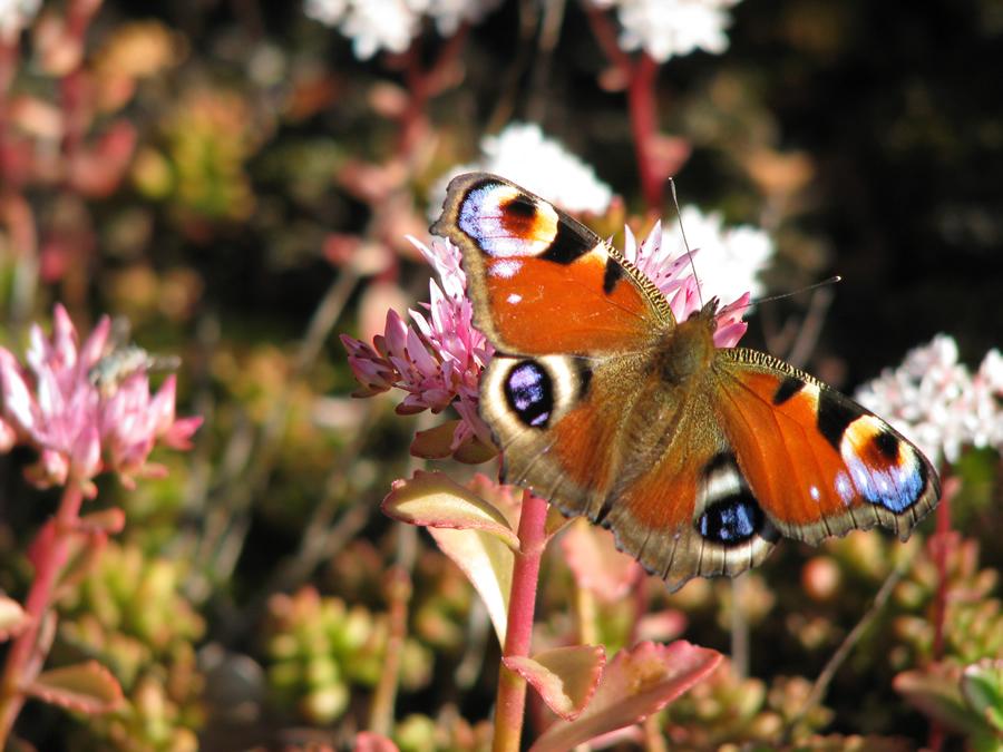 Biologisch Und Ökologisch: Frische Produkte Aus Dem Garten